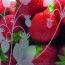 Kew Comport strawberries detail